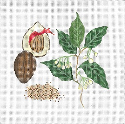 click here to view larger image of Botanical Spice Tile - Nutmeg (hand painted canvases)