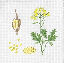 click here to view larger image of Botanical Spice Tile - Mustard (hand painted canvases)