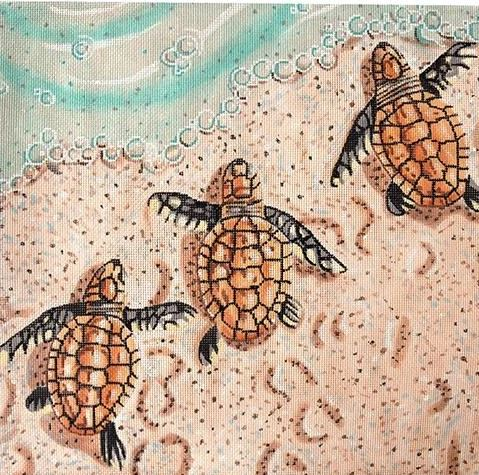 Baby Sea Turtles - click here for more details