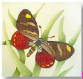 click here to view larger image of Butterfly VI (hand painted canvases)