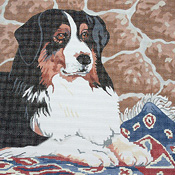 click here to view larger image of Bernese Mountain Dog (hand painted canvases)