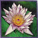 click here to view larger image of Cape Blue Waterlily (hand painted canvases)