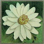 click here to view larger image of Egyptian Lotus (hand painted canvases)