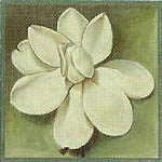 click here to view larger image of Magnolia Alba (hand painted canvases)