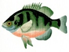 click here to view larger image of Bluegill (hand painted canvases)