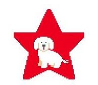 click here to view larger image of Bichon Frise Star (hand painted canvases)